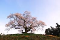 発地の彼岸桜 2 - Patrappi annex