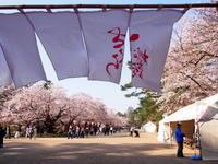桜の弘前公園、2年目の「弘前さくら桟敷」へようこそ - 弘前感交劇場