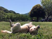 寄ドッグラン再訪 - Kokiary@ のどかへつなぐ happy days