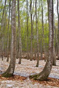 芽吹きの頃 - 松之山の四季2