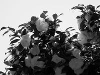 季節の終わり - 節操のない写真館