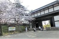 藤田八束の桜前線@青森県弘前市弘前城の桜の美しさに逢いました・・・感動の美しさ弘前城の桜 - 藤田八束の日記