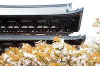 桜紀行 仁和寺の桜 2018 - 暮らしを紡ぐ