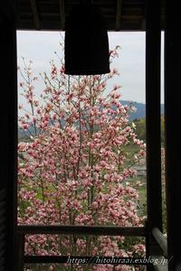 奈良花紀行木蓮聖林寺 - 暮らしを紡ぐ