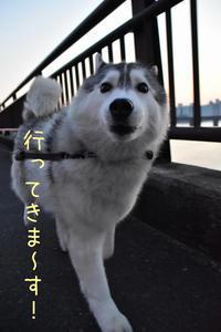 はな花Day ♪ (^o^) - 犬連れへんろ*二人と一匹のはなし*