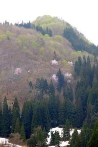 里山 Spring View - 長女Yのつれづれ記