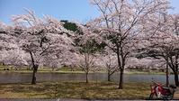 春の紀伊半島 ① - カブログ