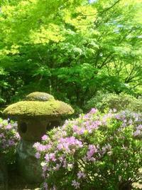 大寧寺の新緑 - coco diary 山口県 お花と絵と楽しいティータイム