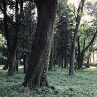 群馬の森 - ドコカ遠くと日々のアシモト