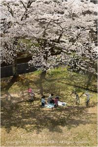今年の桜♯3 - あ お そ ら 写 真 社