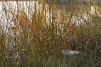 巣篭る… @ 水上池 - 東大寺が大好き