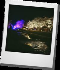 夜桜・・・観音寺川のライトアップ見てきました。 - khh style