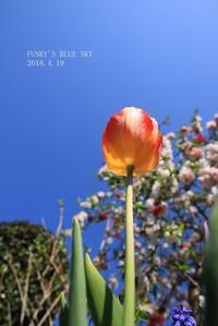 B.B&Chipo*の庭だよりと、「ありがとう」 - FUNKY'S BLUE SKY
