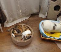 ミケ子とばかり遊んでるわけではありません。 - ぶつぶつ独り言2(うちの猫ら2018)