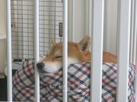 昼寝④「でろーん」 - yamatoのひとりごと