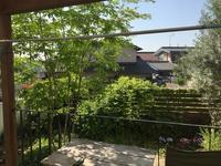 モッコウバラの開花と私のtinyキッチンガーデン - イギリスを感じるVintage Styleな家&暮らし