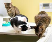 ホルタは入院中 - 猫と夕焼け