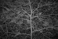 森のアート - フォトな日々
