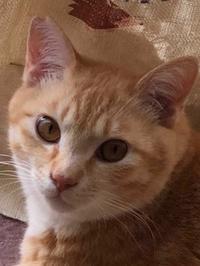 かわいいボク - 愛犬家の猫日記
