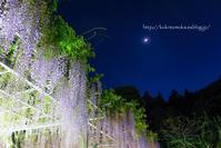 プチライトアップ藤 - 長い木の橋