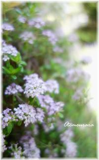 タイムが咲くと・・・ - 日々楽しく ♪mon bonheur