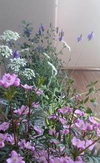 風薫る春から初夏を運ぶ - アートで輪を繋ぐ美空間Saga