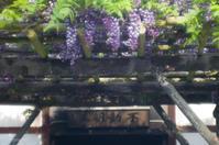 南円堂の藤 - TAKE IT EASY
