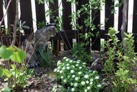 シロヤマブキの花 - 小さな森のキキとサラ