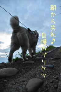 ジロちゃんめぐり、花めぐり♡ (*^_^*) - 犬連れへんろ*二人と一匹のはなし*