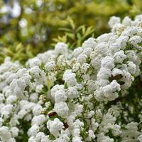 花があふれて...。 - 好日晴天.ほんじつはせいてん