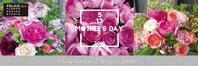 『母の日ギフトフラワー』 受け付け中です - 「想いを伝える幸せの花」by FELICE Flower Design Studio & Regalo