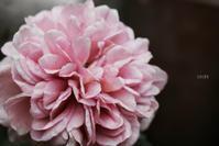 小さなお庭の奇跡 - CHIROのお庭しごと