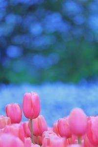 咲いた 並んだ - 美は観る者の眼の中にある