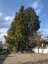 高木伐採/クレーン - 三楽 sanraku 造園設計・施工・管理 樹木樹勢診断・治療