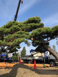 倒木支柱 - 三楽 sanraku 造園設計・施工・管理 樹木樹勢診断・治療