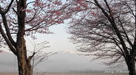 山の春とアオゲラ - 雅郎の花鳥風月