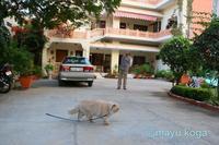 インド・ジャイプールの可愛い宿で出会った猫・ルビーちゃん②&アンベール城 - ねこ旅また旅