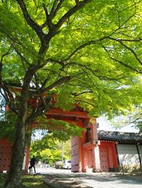 初夏の陽気の京都を歩きました。(真如堂、京都御苑) - ご無沙汰写真館