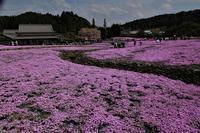 永沢寺の芝桜 - 写真を主とした日記です