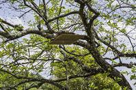 ニホンミツバチの分封 - 良え畝のブログ