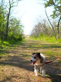 日曜日はオトウサンと海散歩。 - pineのあしおと