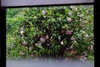 雨の日の乙女椿 - きずなの家
