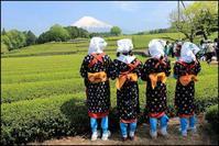 5月3日は大渕お茶まつりです - 富士山大好き~写真は最高!
