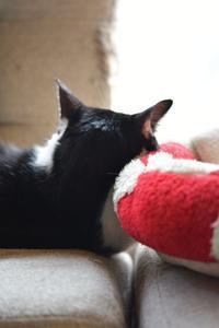 ラスボス - Black Cat Moan