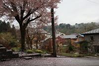 桜色~ - ユリ 百合 ゆり 魚沼農場の日々