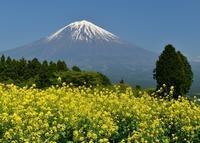 白糸自然公園 - 富士山に夢中