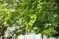 あの空 - Poetry Garden 詩庭