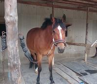 馬とご婦人 - ヨモギ日記
