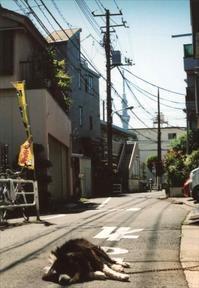 写真展「東京万華鏡」記録 9 - 散歩日和