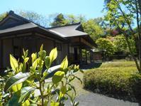 2018年5月の藤田記念庭園茶会開催のお知らせ - Tea Wave  ~幸せの波動を感じて~